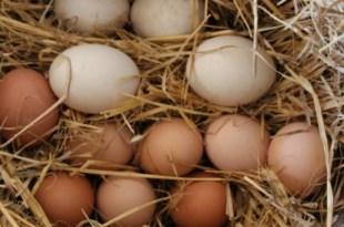 Suurenenud liige ja munad Mis on liikme suurus noorukitel 16 aastat