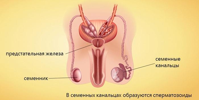 Penisovi suuruse normid Suurenda liige on toesti voimalik